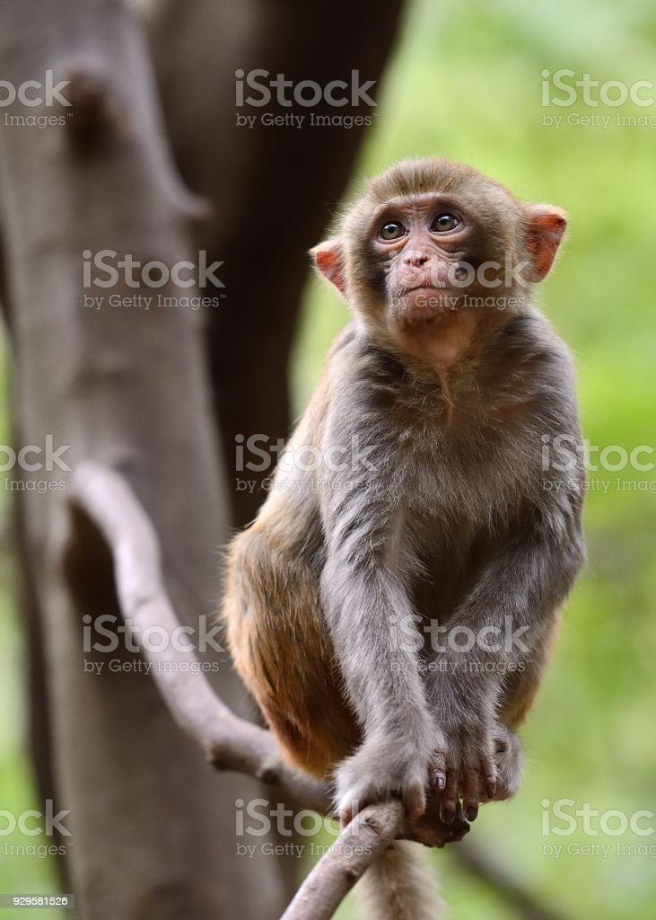 In the tree sits a young monkey stock photo