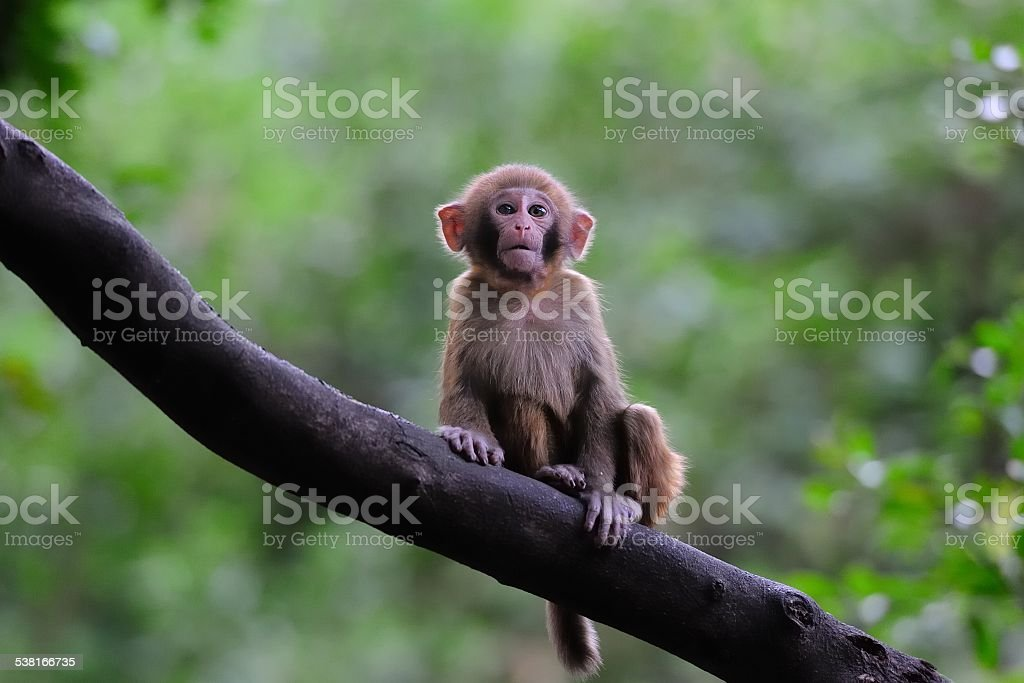 In the tree sits young monkey stock photo