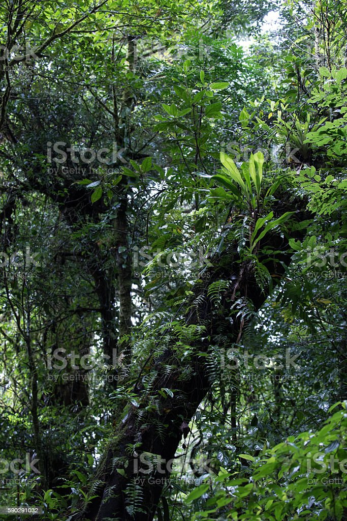 In the tropical cloud forest of Monteverde Costa Rica stock photo