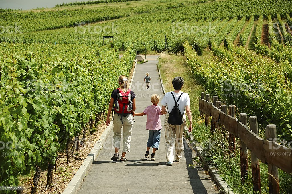 in the vineyard royalty-free stock photo
