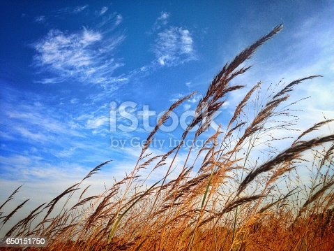 istock In the Wind 650151750