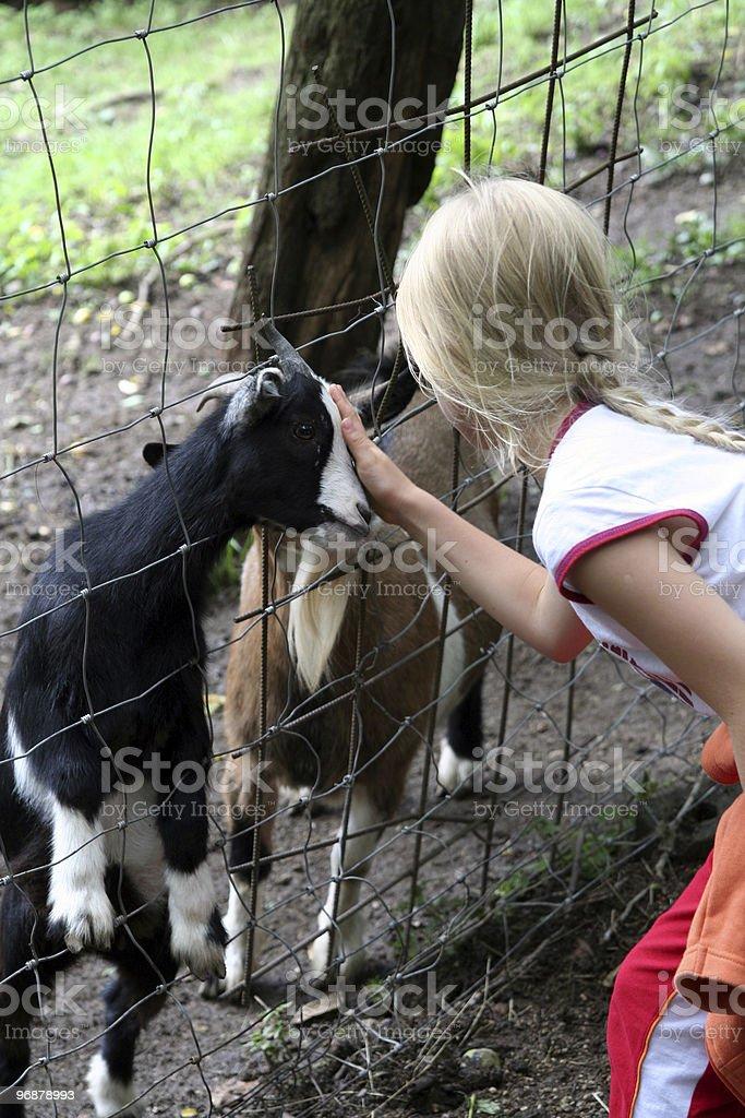 In den zoo Lizenzfreies stock-foto