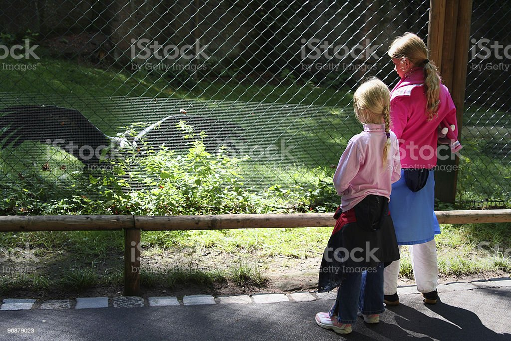 In the zoo royalty-free stock photo