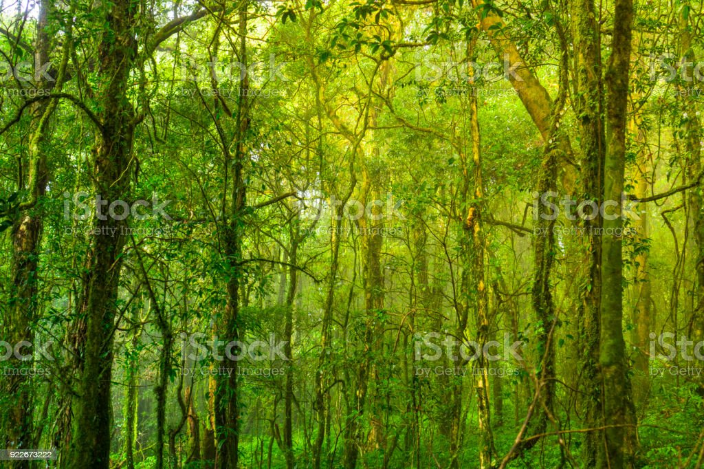 in to the wild, forest in Inthanon national park, Thailand stock photo