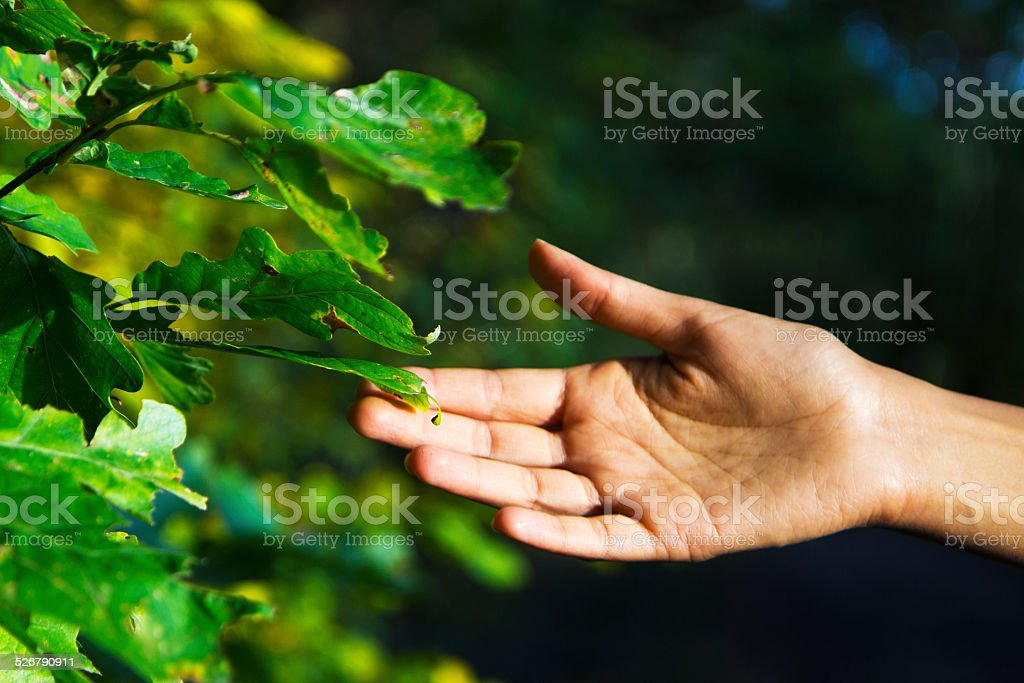 In touch with Nature stock photo
