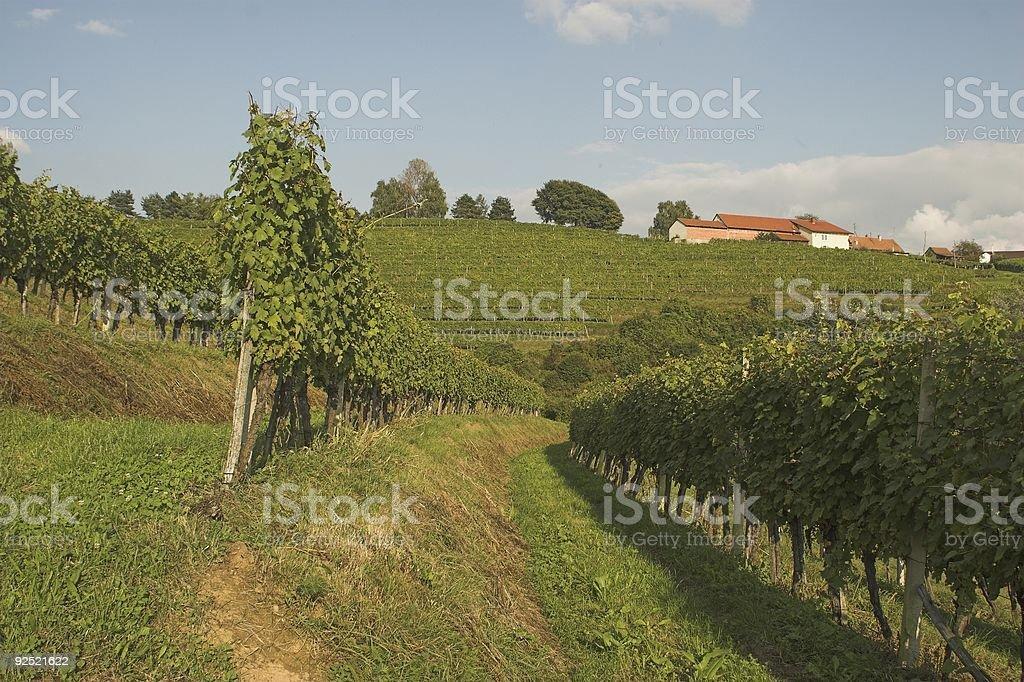 In vineyard row royalty-free stock photo