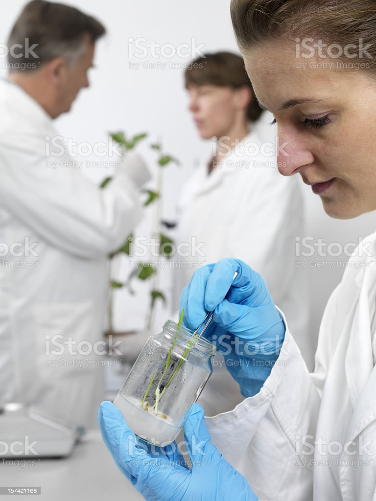 In vitro culture royalty-free stock photo