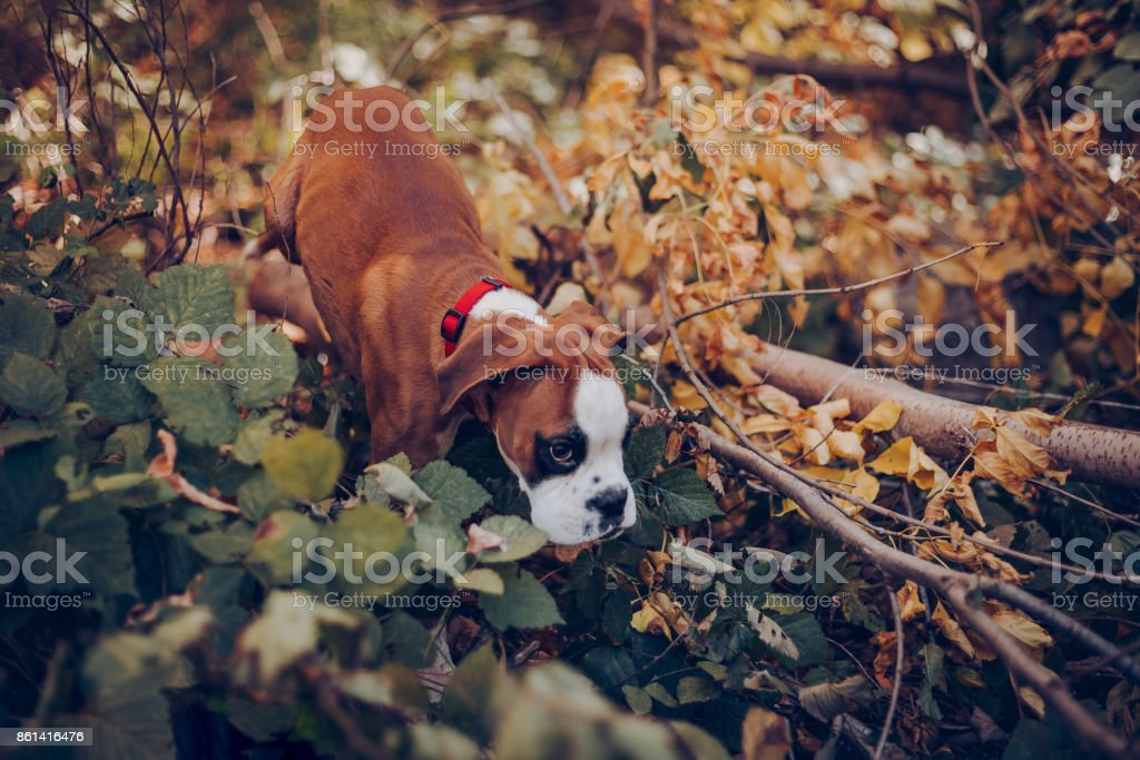 In walk with cute puppy stock photo