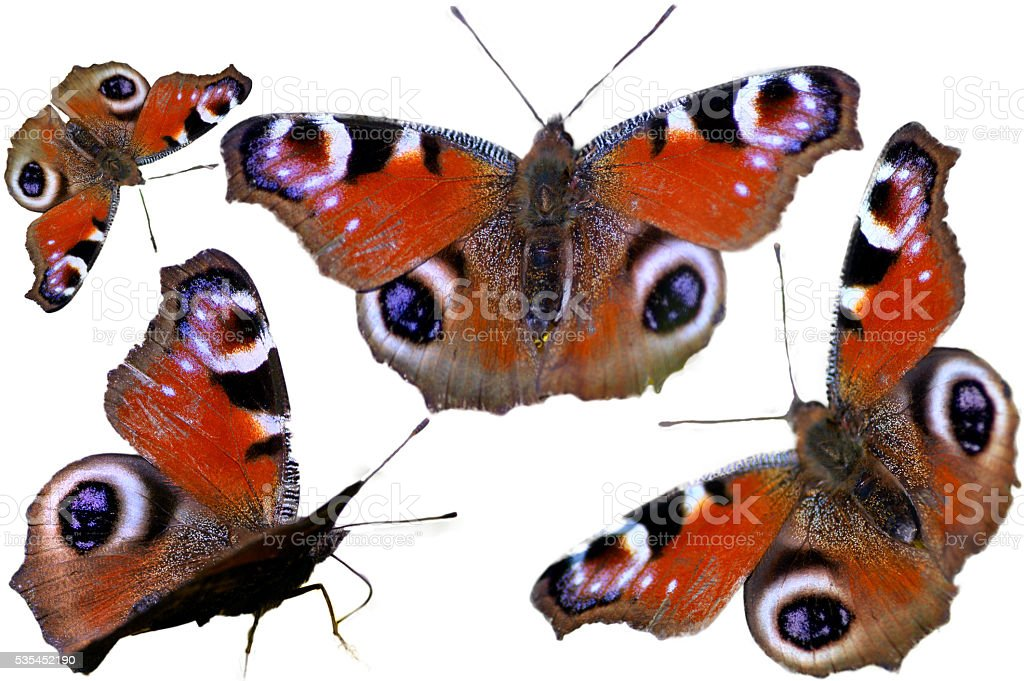 Inachis io isolated, butterfly. stock photo
