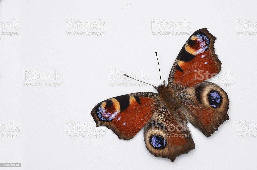 Inachis Io, Peacock butterfly stock photo