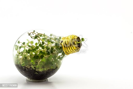 Incandescent bulbs with plants planted inside this is reasonable solution for recycling burned incandescent bulbs.
