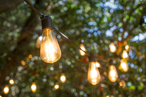 incandescent light bulb hanging In a garden.