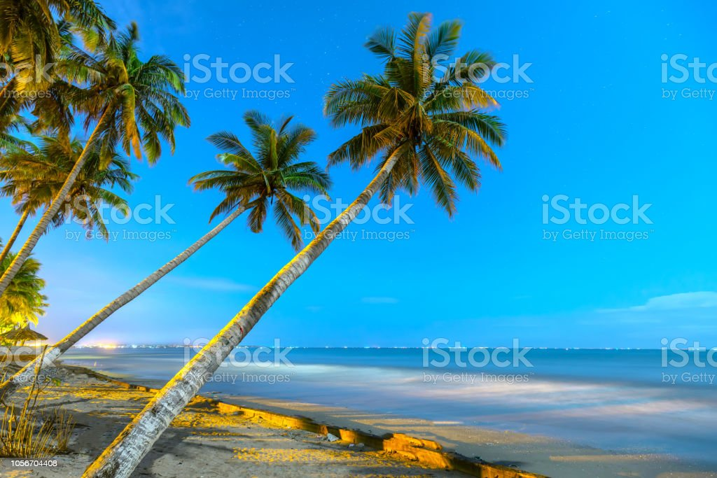 Inclined coconut trees leaning toward the tropical beach stock photo