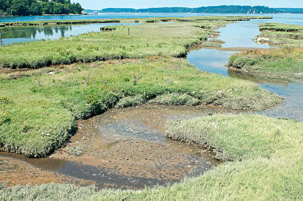incoming tide to restored estuary at nisqually delta in washington - 泥灘 個照片及圖片檔