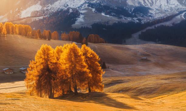 unglaubliche herbstlandschaft mit gelben lärchen in alpe di siusi in den dolomiten bei sonnenaufgang - seiser alm stock-fotos und bilder