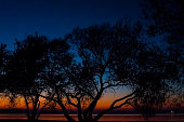 Incredible, bright sunset over the water against the background of which the silhouette of a large tree. Minsk Sea, Belarus