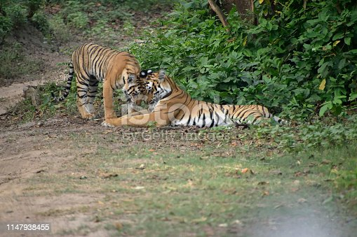 beautiful Tiger reserve forest in india