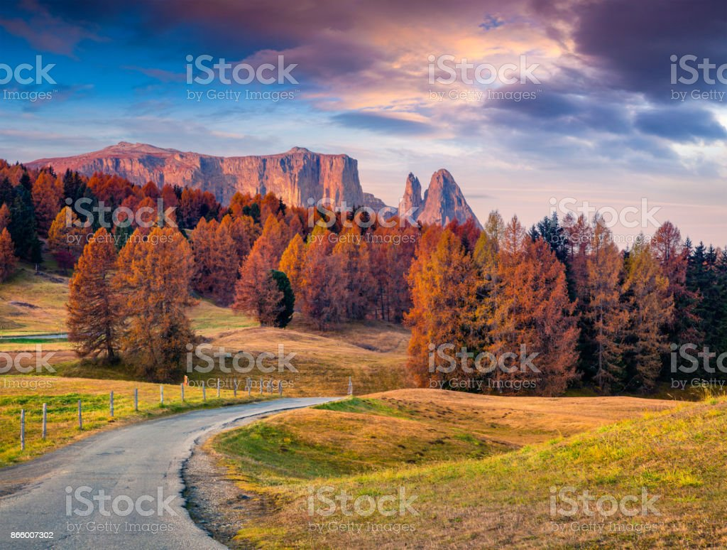 Incredible outdoor scene in Alpe di Siusi with beautiful yellow larch trees and Schlern (Sciliar) mountain on background stock photo