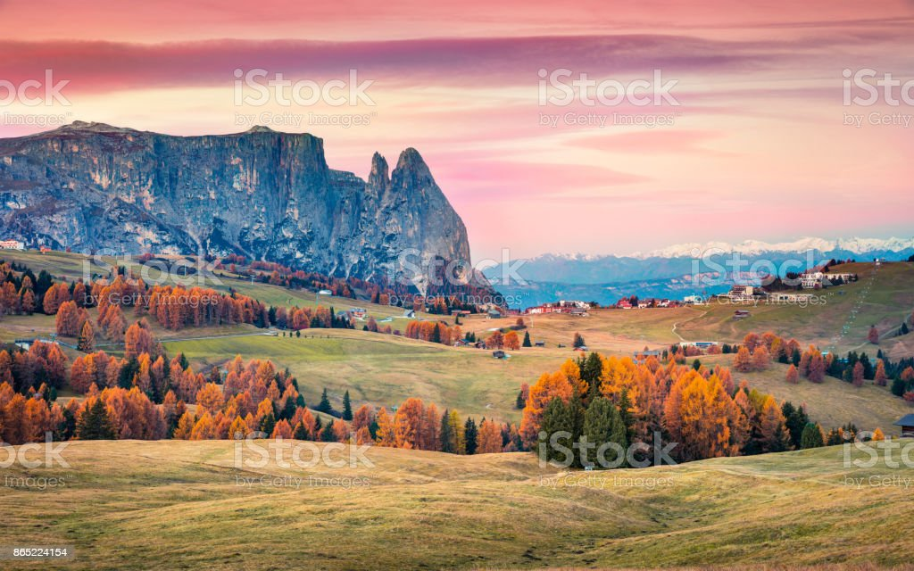 Incredible sunrise in Alpe di Siusi with beautiful yellow larch trees and Schlern (Sciliar) mountain on background stock photo