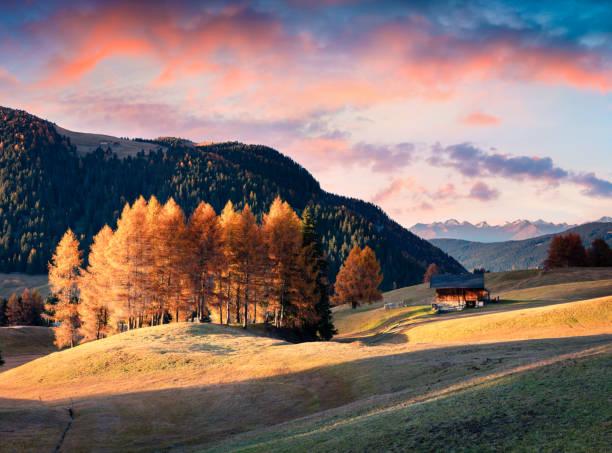 unglaubliche sonnenuntergang in alpe di siusi mit schönen gelben lärchen - seiser alm stock-fotos und bilder