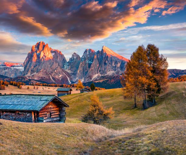 unglaubliche sonnenuntergang in alpe di siusi mit schönen gelben lärchen. - seiser alm stock-fotos und bilder