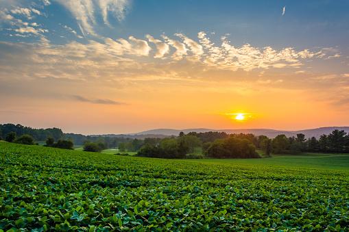 Incredible sunset sky over the Piegon Hills and farm fields, near Spring Grove, Pennsylvania.