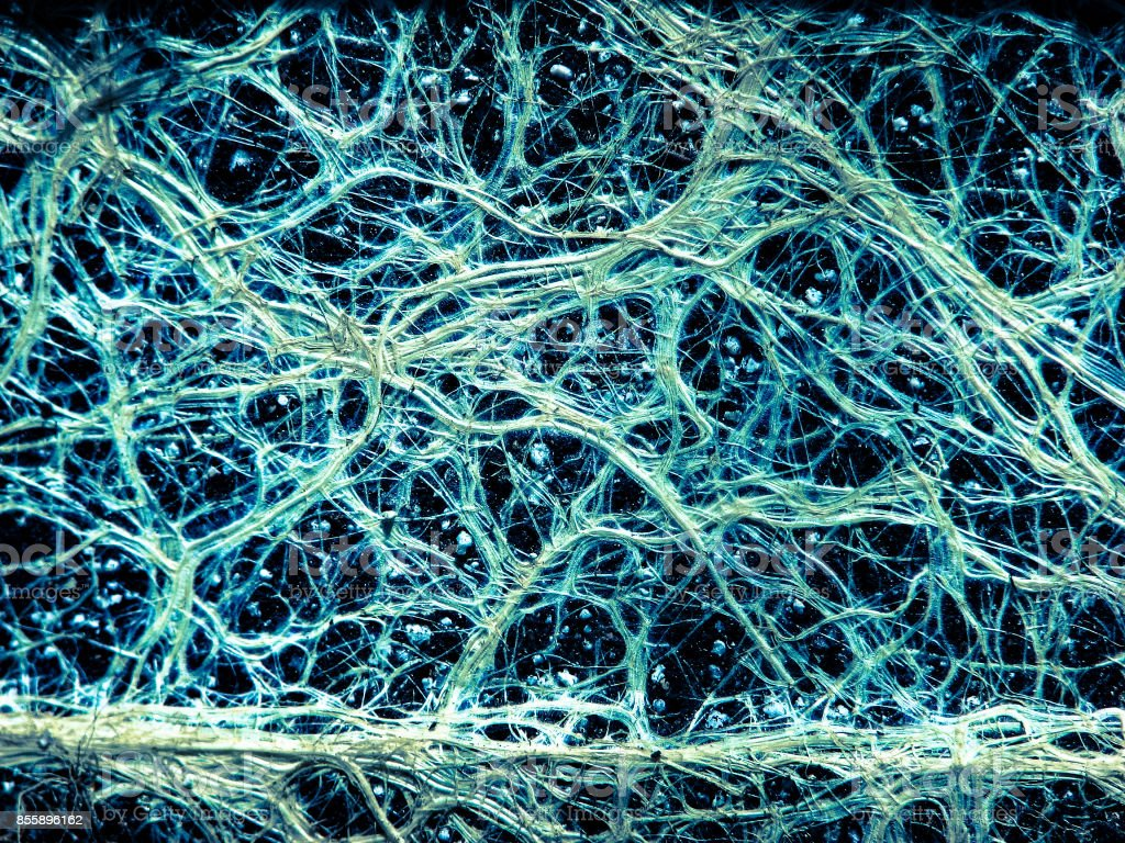 Incredible vascular plant fine roots looking like a neural network stock photo