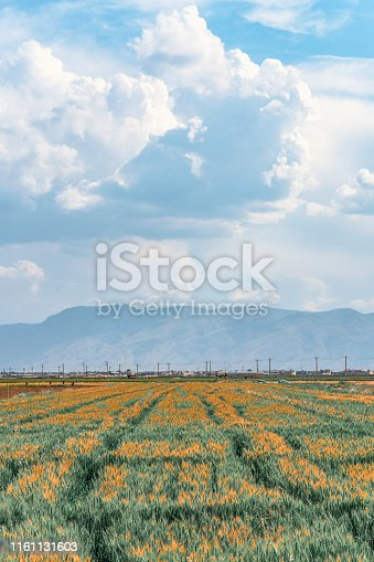incredibly beautiful landscape of sown field against the background of mountains and unsurpassed clouds in Shiraz, Fars Province Iran