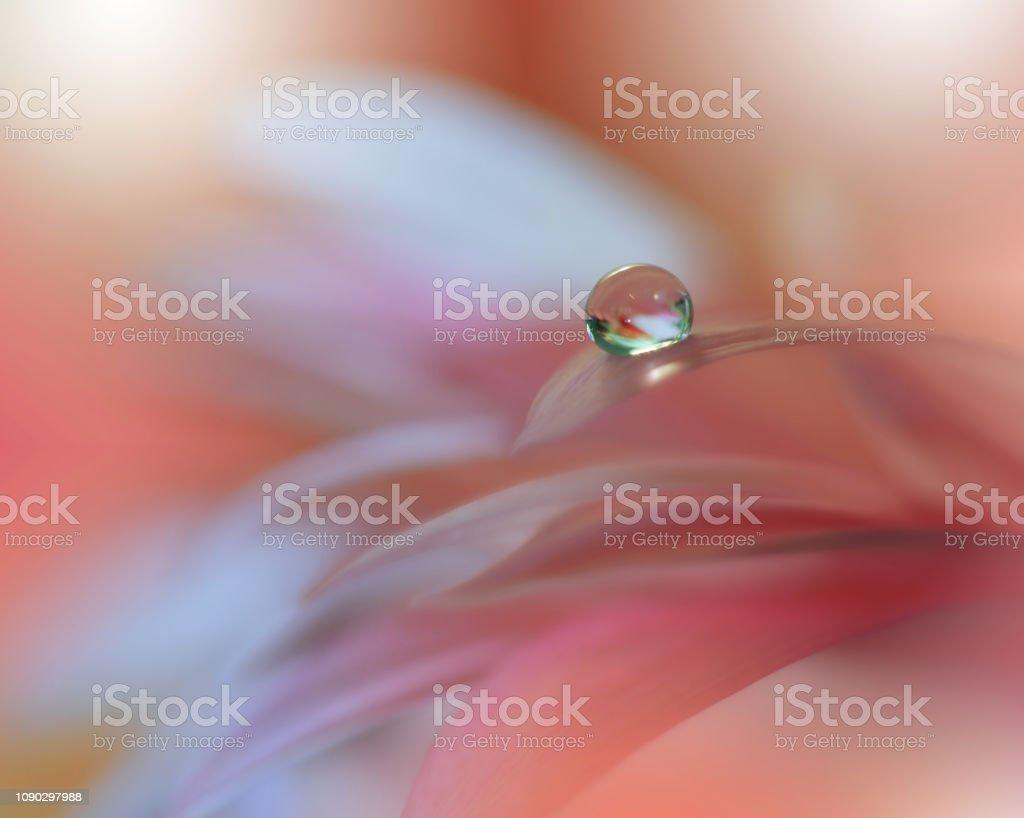 令人難以置信的美麗自然藝術攝影花卉奇幻設計抽象宏觀特寫鏡頭水滴藝術