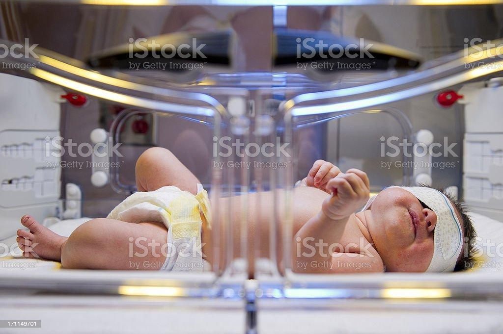 Incubator stock photo