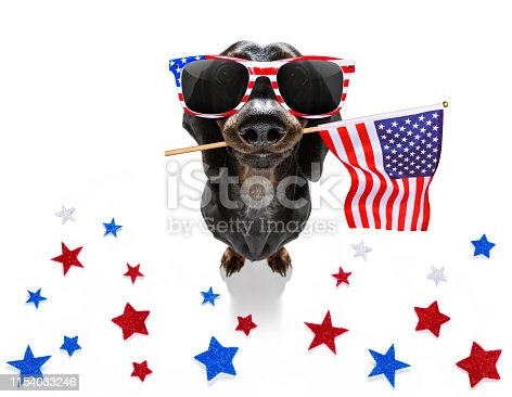 istock independence day 4th of july dog 1154083246