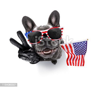 509363072 istock photo independence day 4th of july dog 1154083321