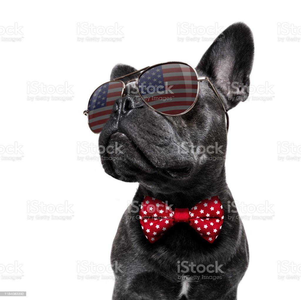 independence day 4th of july dog - Foto stock royalty-free di 4 Luglio