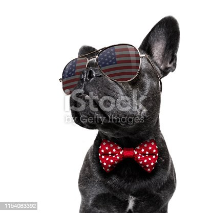 istock independence day 4th of july dog 1154083392