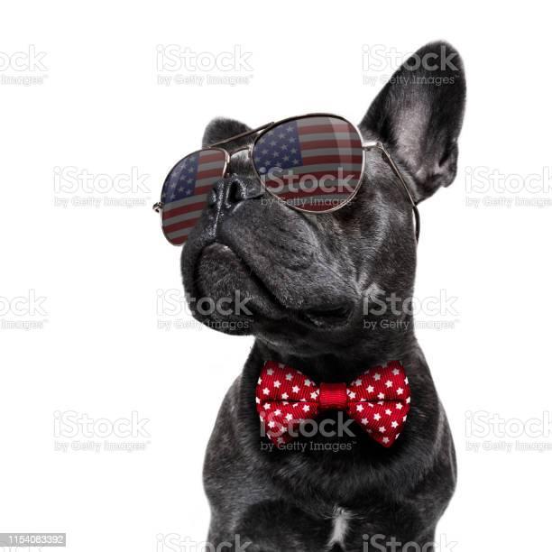 Independence Day 4th Of July Dog - Fotografie stock e altre immagini di 4 Luglio