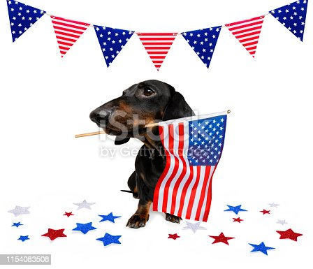 istock independence day 4th of july dog 1154083508