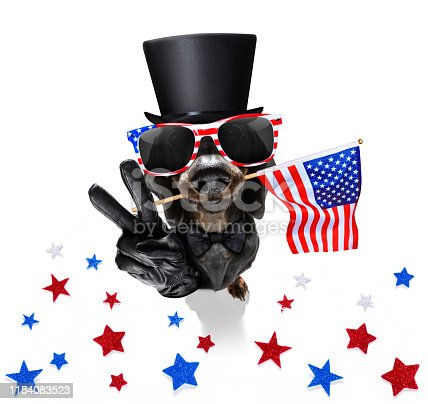 istock independence day 4th of july dog 1154083523