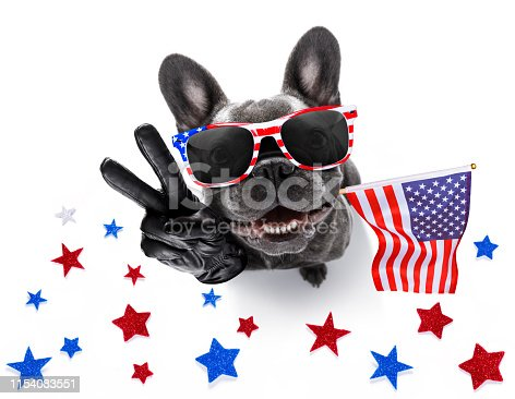 815401356 istock photo independence day 4th of july dog 1154083551