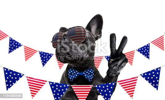 509363072istockphoto independence day 4th of july dog 1154083565