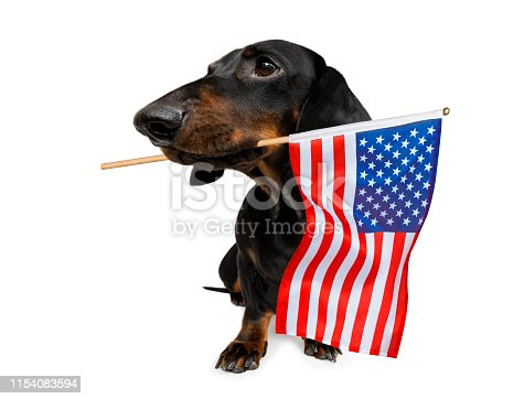 509363072istockphoto independence day 4th of july dog 1154083594