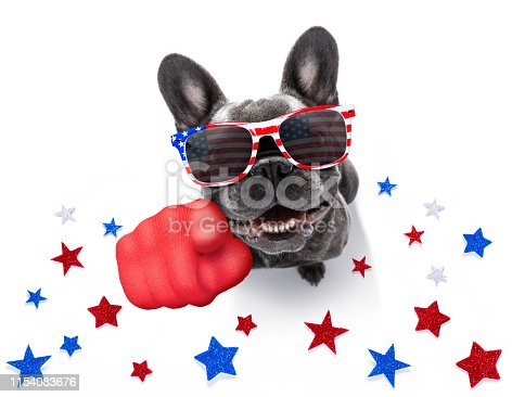 istock independence day 4th of july dog 1154083676