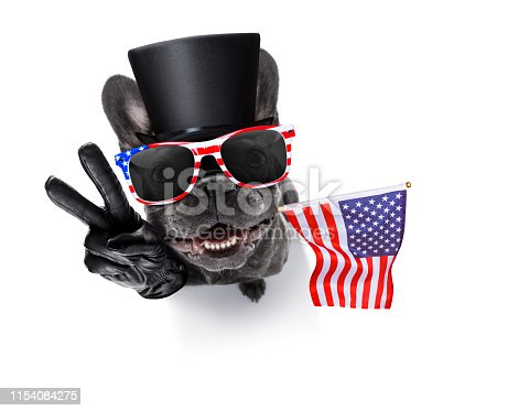 509363072 istock photo independence day 4th of july dog 1154084275