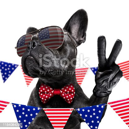 815401356 istock photo independence day 4th of july dog 1154084297