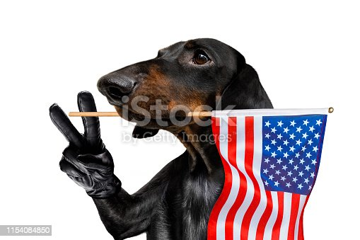 509363072 istock photo independence day 4th of july dog 1154084850