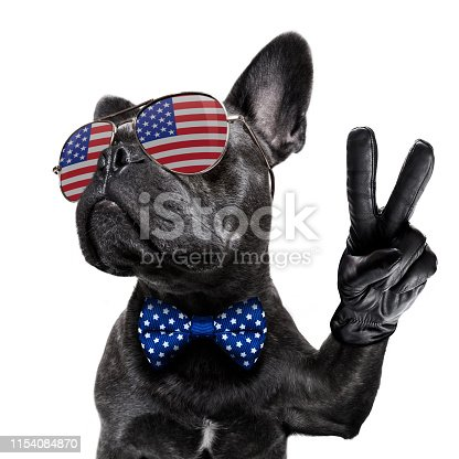 istock independence day 4th of july dog 1154084870