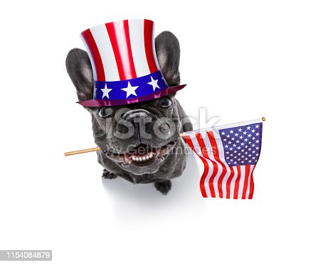 istock independence day 4th of july dog 1154084879