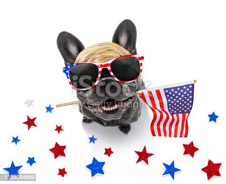 815401356 istock photo independence day 4th of july dog 1154084889