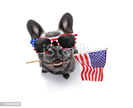 815401356 istock photo independence day 4th of july dog 1154084899