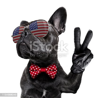 istock independence day 4th of july dog 1154998045