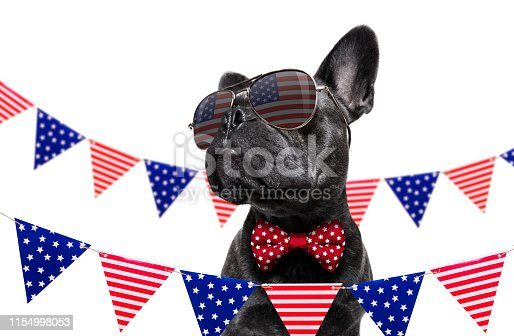istock independence day 4th of july dog 1154998053